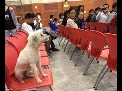 Chinese students furious as stray dog that attended lectures is killed by university officials..