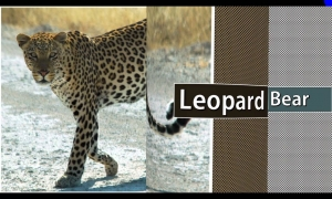 Wild Animals Video for Kids | Learn English (for beginners) | Video for Preschool and Kindergarten