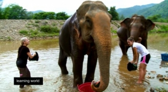 Summer break in Thailand: Volunteering with elephants (Learning World: S5E42, 1/3)