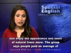 The Business of Christmas Trees : Learning English